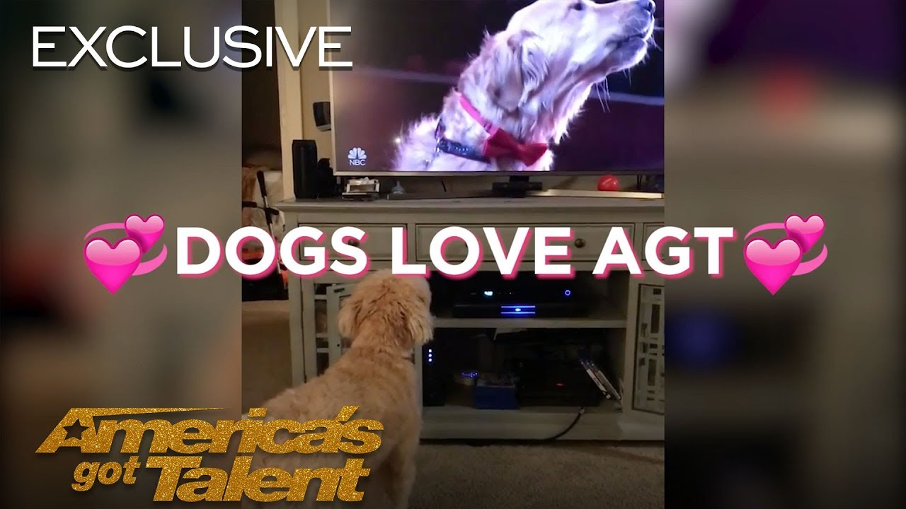 Dogs React To Singing Dog - America's Got Talent 2018
