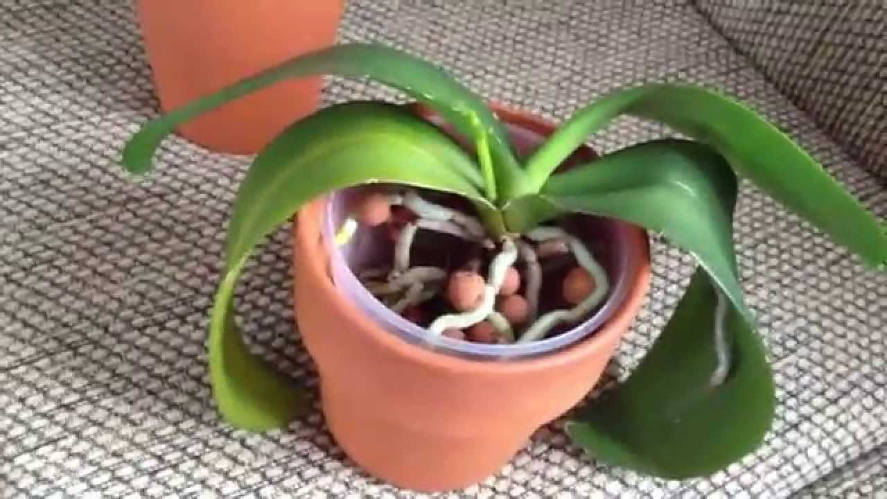 New Orchids Growing Spike