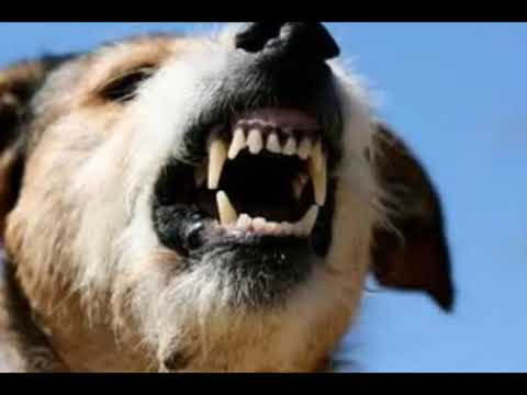 صوت كلب Youtube