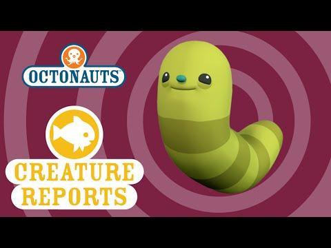 Octonauts: Creature Report - Midnight Zone