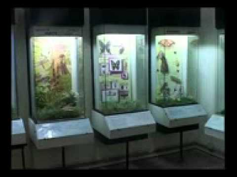 PAKISTAN MUSEUM OF NATURAL HISTIRY
