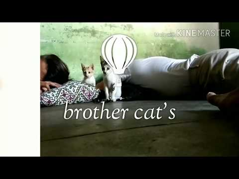 The Cat brothers dancing | Don't miss it | Relax Vids