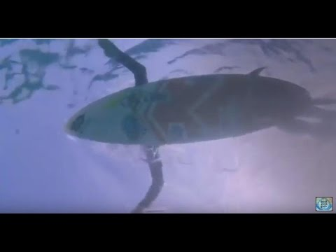 Aussie/Ozzie Surfing - Surfing with Sharks featuring Australian surf rock by Playboys #sharksurfing