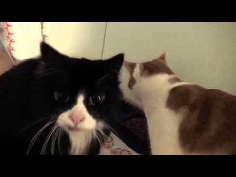 Kissadokumentti (Cat Documentary) - Joulu Video 22.12.2015