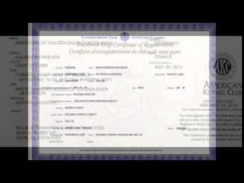 Kennel Registration