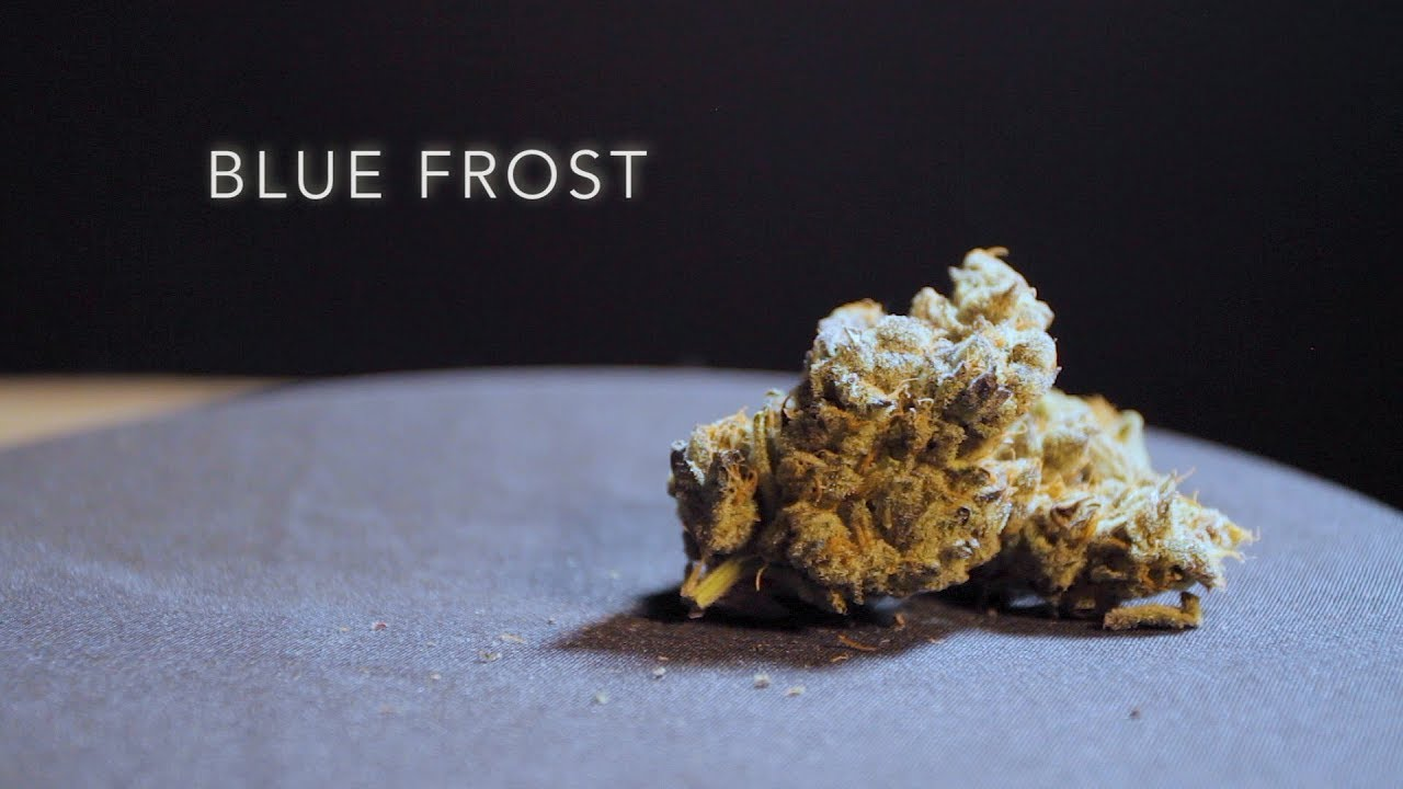 Blue Frost Strain - Everything you need to know & more