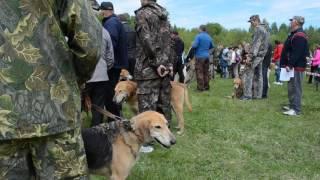 открытие 62 выставки охотничих собак в тамбове. 14 мая 2017