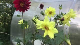 Подготовка сада , огорода , дачного участка к зиме