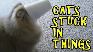 Cats Getting Stuck in Things Compilation 2016 [NEW]