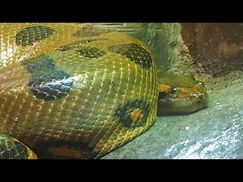 Los animales mas peligrosos de la selva youtube - Mas goy fornells de la selva ...
