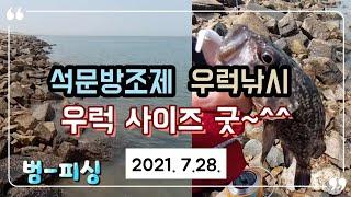 석문방조제 낚시 우럭낚시 우럭 사이즈 굿~^^