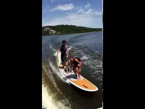 Adorable Dog Surfing!