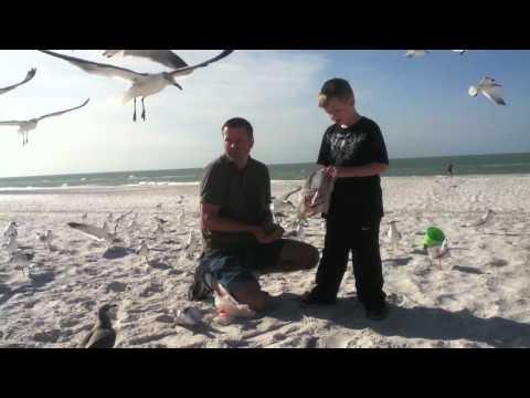 Feeding birds on the beach • 2012