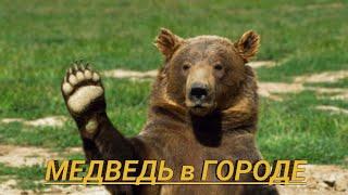 Чемпионат Мира по футболу в России. Россия - Саудовская Аравия. Медведь в городе.