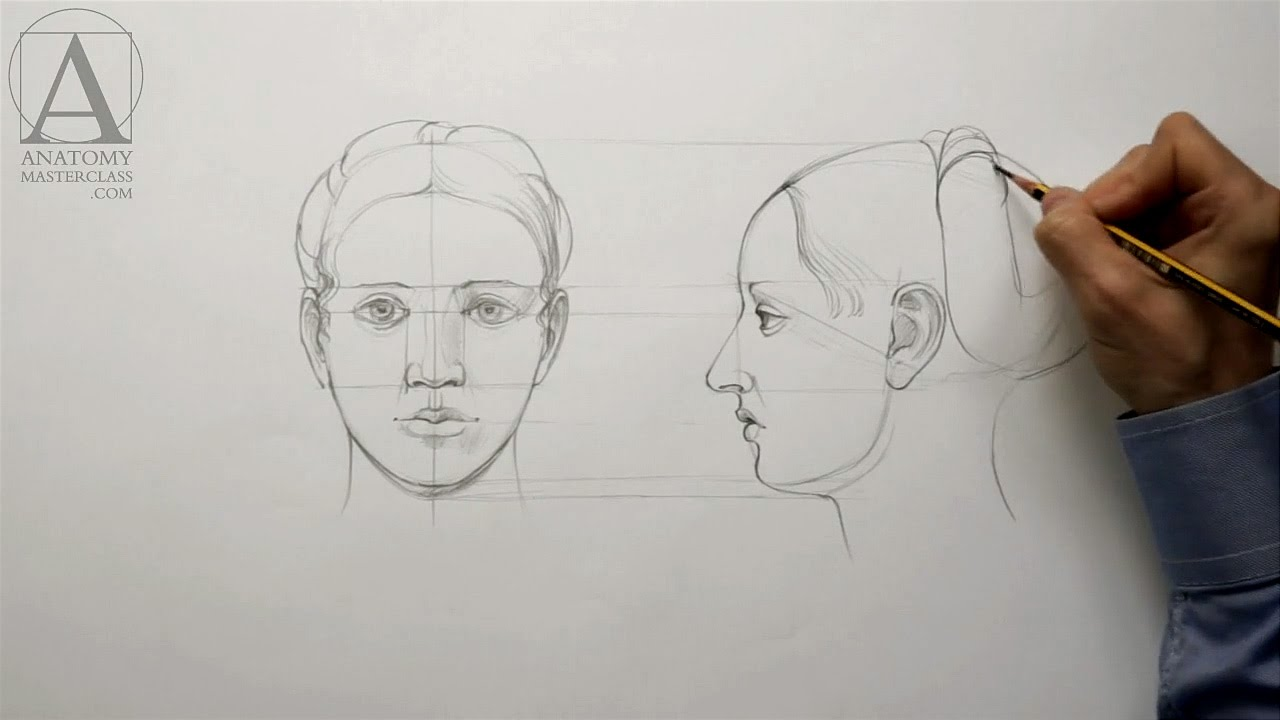 Human Head Proportions - Anatomy Master Class - YouTube