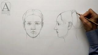 Human Head Proportions - Anatomy Master Class