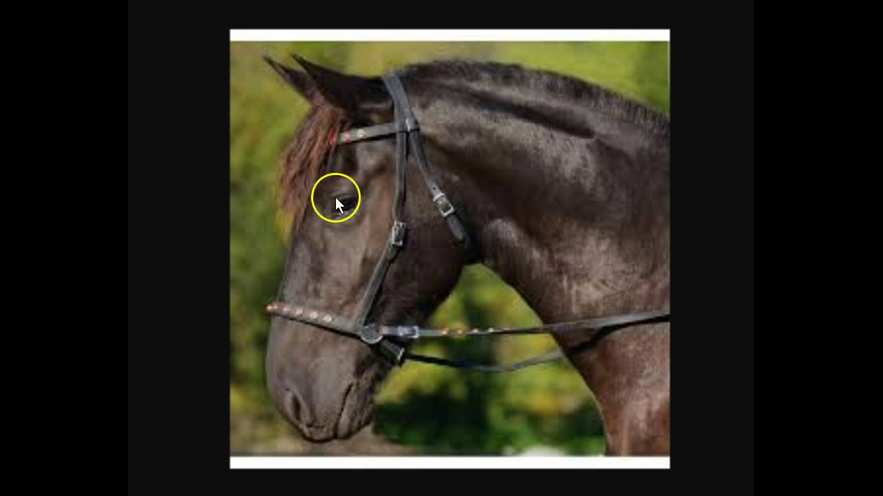 Bitless bridle - Wikipedia