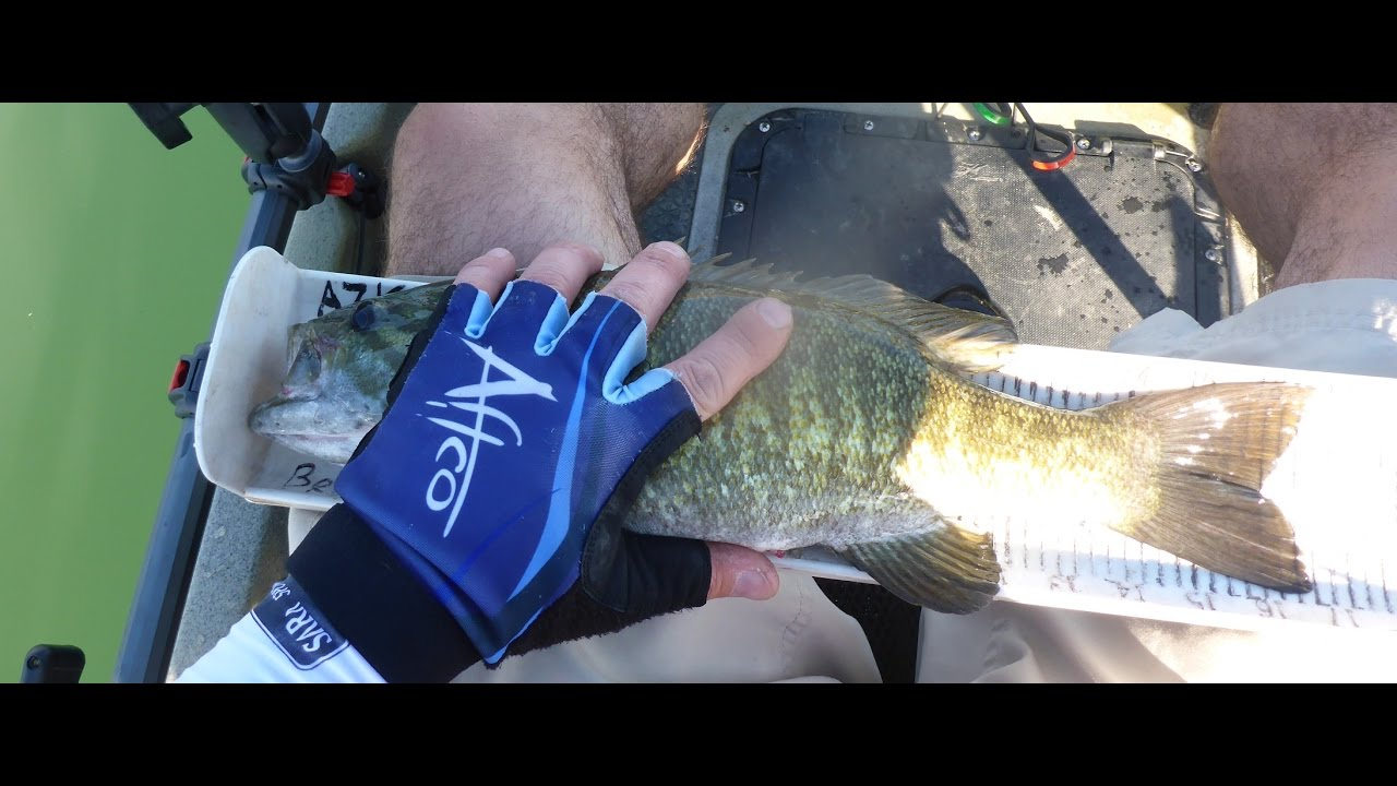 Kayak Fishing Lake Havasu Castle Rock Youtube