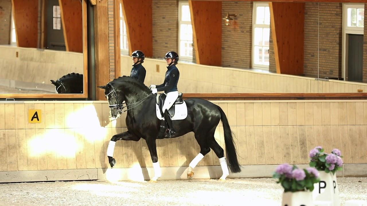Sélection néerlandaise des Championnats du Monde Jeunes Chevaux