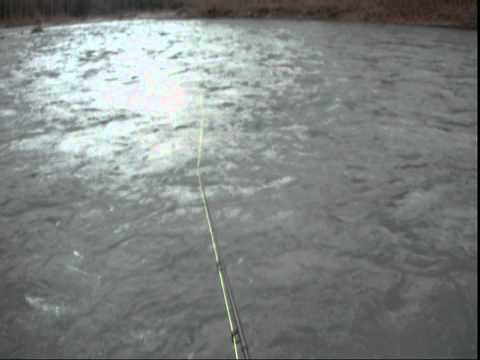 Nooksack River Bull Trout On The Fly In HD