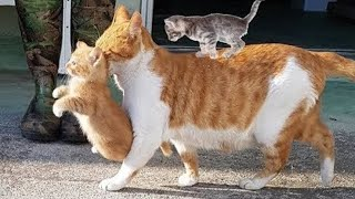 Mother cats protecting 🛑 their babies , cute cats 🐱 and kittens