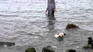 波静かな西伊豆堂ヶ島 仔犬のワルツのリュウが早速泳ぎました\(^▽^)/ ...
