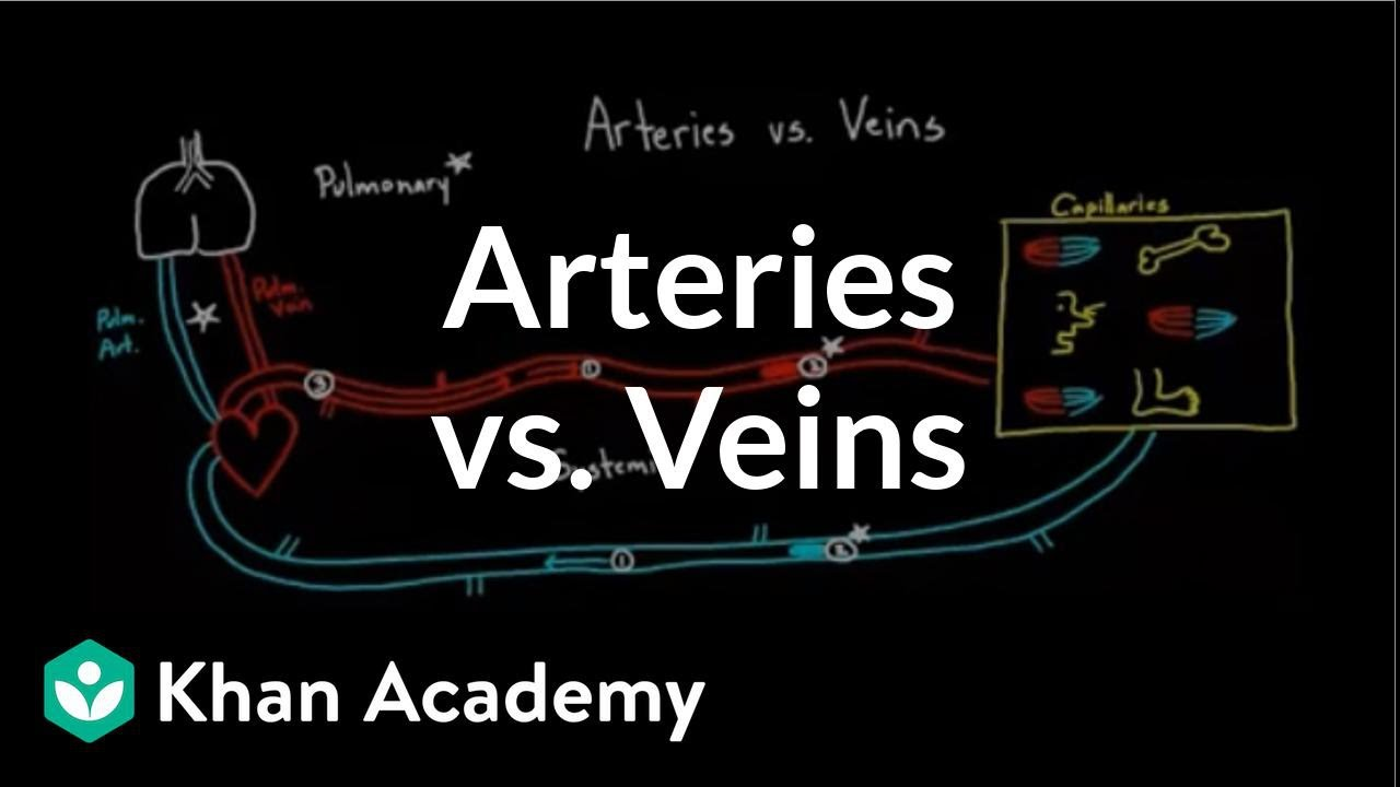 Arteries vs  veins - what's the difference? (video) | Khan Academy