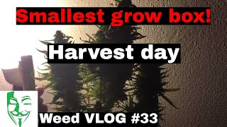 Hi Everyone, I'm finally back here with my new micro grow autoflowe...