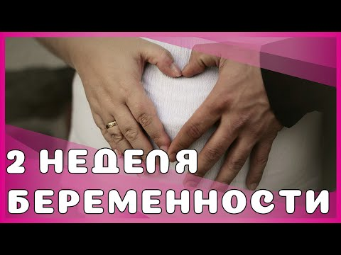 2 неделя беременности: изменения у мамы, особенности, рекомендации