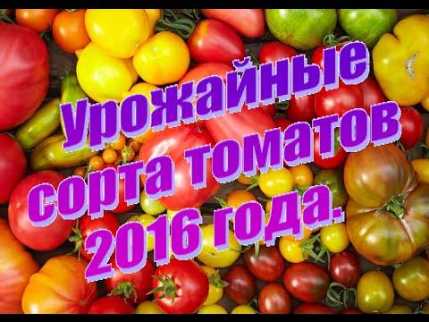 Понравились  Сорта томатов 2016 года
