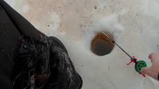 Язь чебак со льда на Ямале 2021 Закрытие сезона твердой воды 2021 на Севере