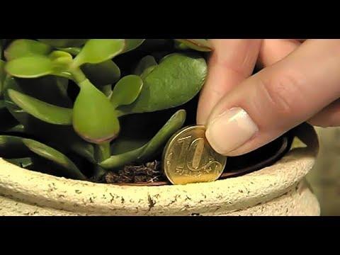 БОЛЬШОЕ РАССЕЛЕНИЕ ЦВЕТОВ/ Как посадить денежное дерево, чтобы деньги водились