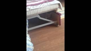 Порно кот
