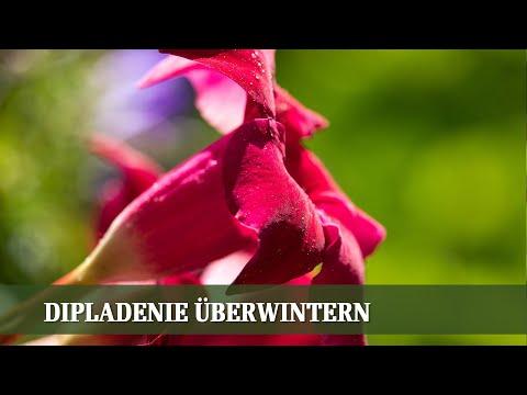 rosen,-sukkulenten-und-bodendecker---folge-#02