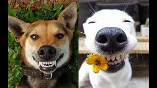 Funny Dogs and Cats Fails |  Funny Dog Memes  - TRY NOT TO LAUGH