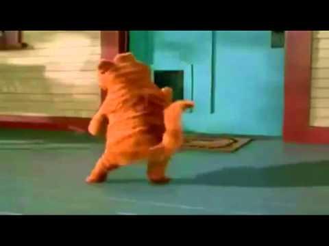 Поздравление С днем рождения от Гарфилда - Смешные видео приколы