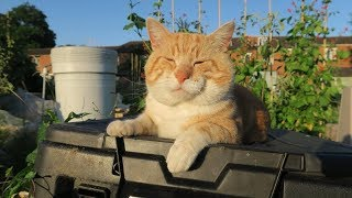 Sean's Allotment Garden Derby Lane 555: Rusty the Allotment Cat talks on camera!