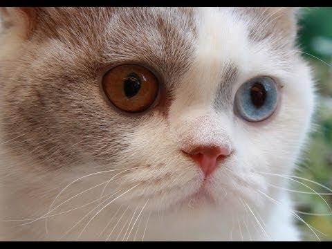 Кошачьи афоризмы и высказывания • Кошки Мира