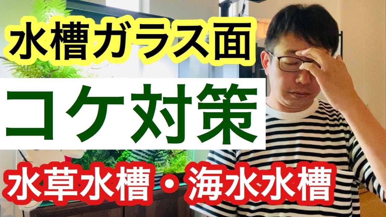【水槽面のコケ対策】水草水槽と海水魚水槽のコケ対策を解説します!!