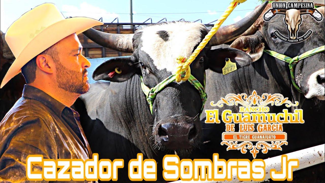 Hijos de toros leyendas! Rancho El Guamuchil de Luis Garcia en Singuio Michoacán 2021