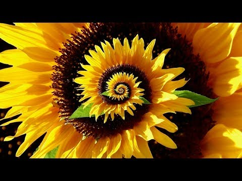 Decoding the Secret Patterns of Nature - Fibonacci Ratio & Pi - Full Documentary