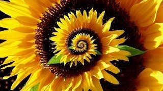 Decoding the Secret Patterns of Nature - Fibonacci Ratio & Pi - Full Documentary