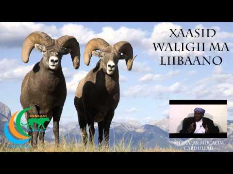 Xaasid Waligii Ma Liibaano Sh Saalax Mucalim Cabdullahi