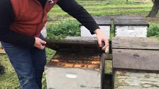 State growers, beekeepers prepare for almond bloom