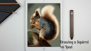 How I Draw A Squirrel on Ipad with: Paper by 53