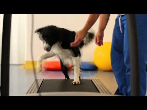 Animal Wellness Centro Fisioterapico Veterinario