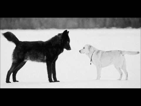 Le loup et le chien (La Fontaine) par Jean-Pierre DARRAS