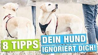 Hund DRAUßEN beschäftigen | INTERESSANT WERDEN | HUNDETRAINING HACKS
