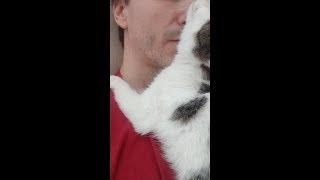 Кошачья любовь, нежность и ласка