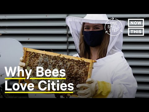 Why Bees Thrive in Cities | One Small Step | NowThis Earth